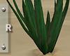 Contempo Cactus 1