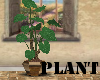 (A)Plant~Philodendron