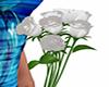 White Roses 7 Poses