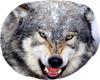 BBJ wolf furniture