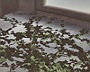 New Floor Vines