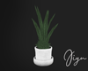 Potted Plant white