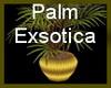 !~TC~! Palm Exsotica