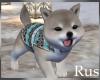 Rus: Shiba Pup Winter 3