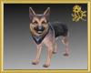 German Shepard Pet