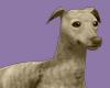 EDEN FaunBrin Greyhound