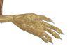 CNTS griffins  hands