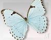 MayeButterflies