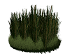 Tall Grass Clump