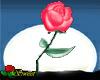 Dancing Rose 4