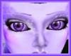 Lavender Brows
