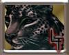 leopard pride