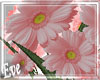 ♣ Crate Of Flowers P
