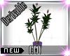 [CCQ]Derv:Plant