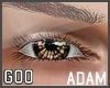 {G} Adam Lashes Brown