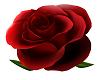 Red Roses Rain trg-roses