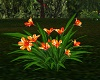 ~CR~Orange Flower