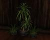 3 pot plant