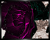 + Pink Rose +