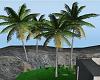 4 Coconut Trees