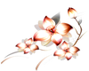 Orange (R) Flowers