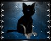 !T! Pet   Black Kitten