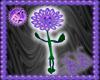 Bou PFB Dancing Flower