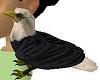 Real Bald Eagle