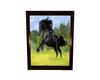 Black Stallion 1