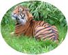 [AR]Tiger