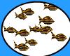 [JAC]yellow Fish