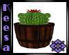 Cactus in Barrel