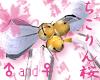 JP chigorin sakura