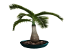Teal Potted Bottle Palm