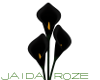 Black Lillies (No Vase)