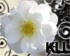 [KLL] Wild White Rose