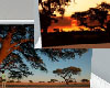 Africa Background Wall