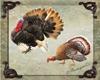 Turkey Enhancer