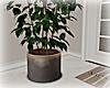 [Luv] Plant 5