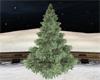 Bushy pine tree
