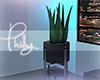 P. Bluez Aloe Plant