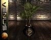 ~V~Japanese Dragon Palm