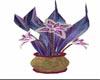 B~ Decorative Plant