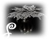 =S=Dark Moonlight Plant