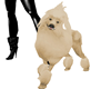 PET Adult Poodle - CREAM