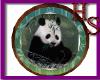 [HS] Panda Photo