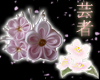 *BRWH* Sakura Kanzashi