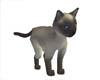 *Adult Siamese PET