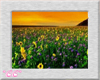 *CC* Field of Sunflowers