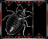 Drax bug 4